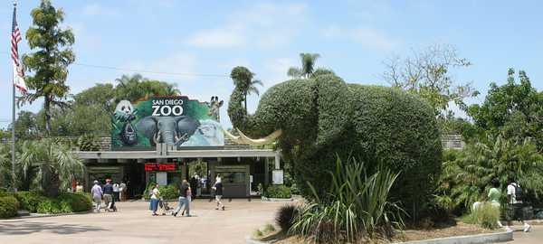 San diego zoo things to do san diego 269 600 270