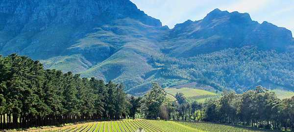 Visit the winelands things to do cape town 116 600 270