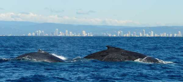 Whale watching things to do san diego 282 600 270