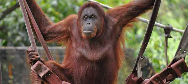Zoo negara things to do kuala lumpur 145 600 270