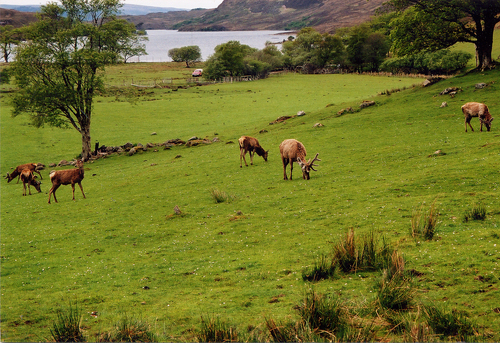 Featured medium photo of Loch Maree on TripHappy's travel guide