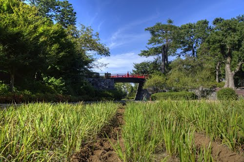 Photo of Odawara in the TripHappy travel guide