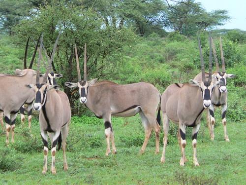 Featured medium photo of Samburu National Reserve on TripHappy's travel guide