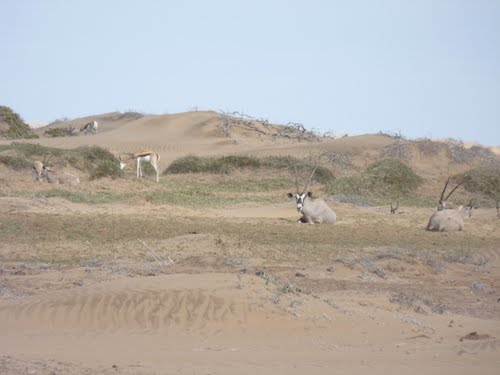 Featured medium photo of Skeleton Coast Park on TripHappy's travel guide