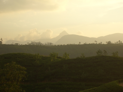 Featured medium photo of Adam's Peak on TripHappy's travel guide