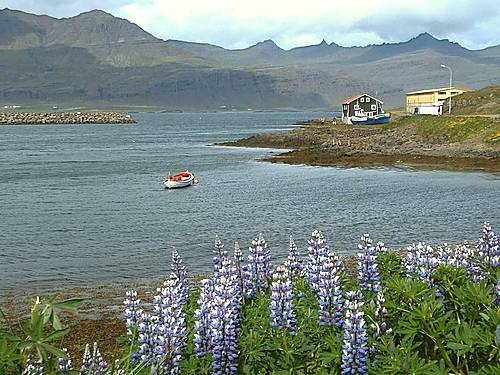 Photo of Djúpivogur in the TripHappy travel guide