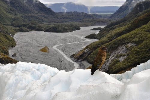 Photo of Franz Josef Glacier in the TripHappy travel guide