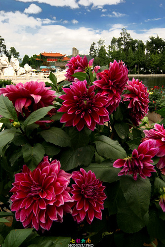 Photo of Kunming in the TripHappy travel guide