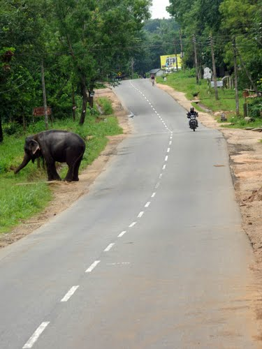 Photo of Sigiriya in the TripHappy travel guide