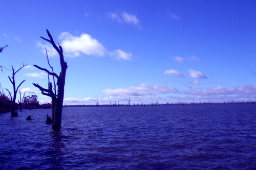 Featured medium photo of Yarrawonga on TripHappy's travel guide