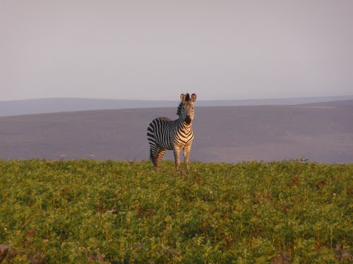 Photo of Nyika National Park (Malawi) in the TripHappy travel guide