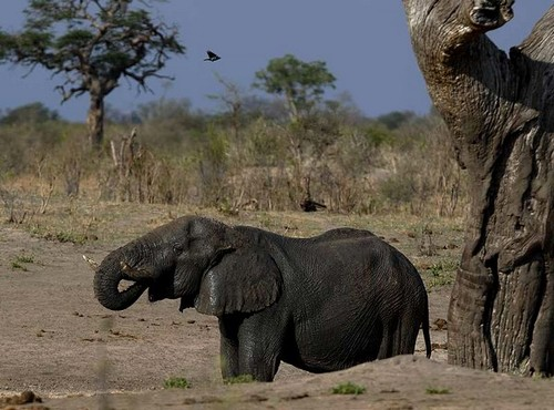 Photo of Hwange National Park in the TripHappy travel guide