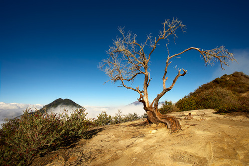 Photo of Ijen in the TripHappy travel guide