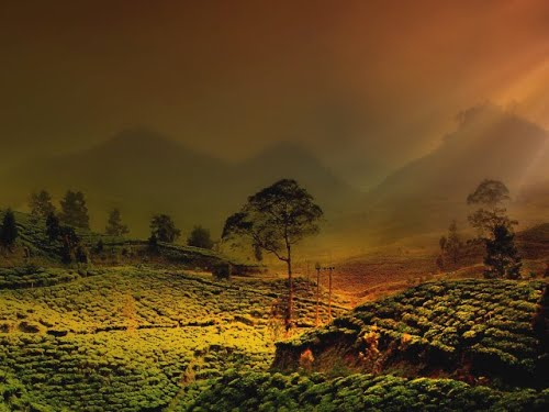 Featured medium photo of Kebun Raya Cibodas on TripHappy's travel guide