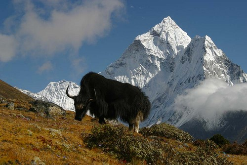 Photo of Mount Everest in the TripHappy travel guide