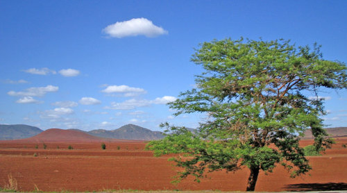 Photo of Tsavo in the TripHappy travel guide