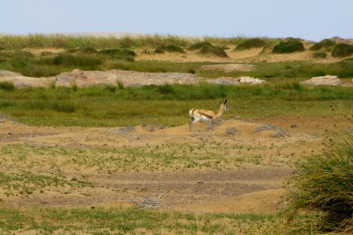Photo of Skeleton Coast Park in the TripHappy travel guide