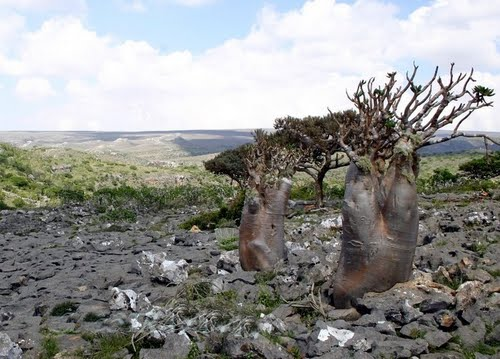 Photo of Socotra in the TripHappy travel guide
