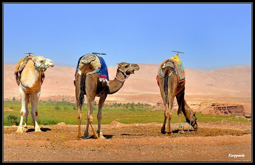 Photo of Aït Ben Haddou in the TripHappy travel guide