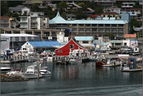 Photo of Picton in the TripHappy travel guide