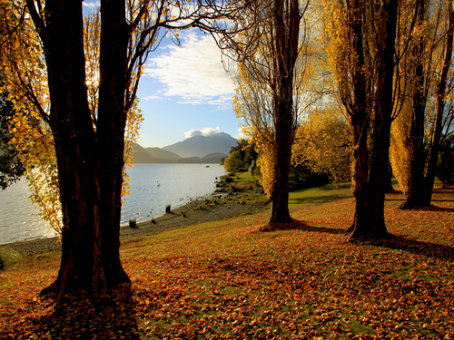 Featured medium photo of Te Anau on TripHappy's travel guide