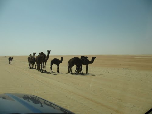 Photo of Abu Dhabi in the TripHappy travel guide