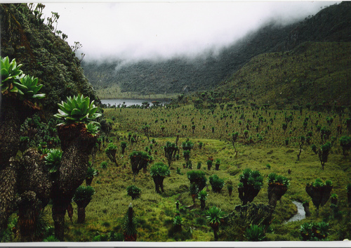 Photo of Rwenzori Mountains in the TripHappy travel guide