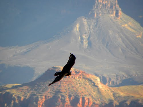 Featured medium photo of North Rim on TripHappy's travel guide