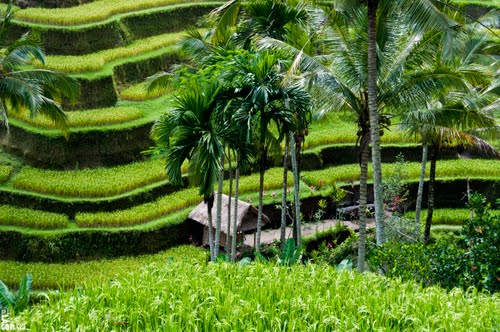 Photo of Ubud in the TripHappy travel guide