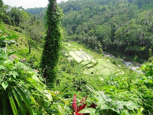 Featured medium photo of Ubud on TripHappy's travel guide
