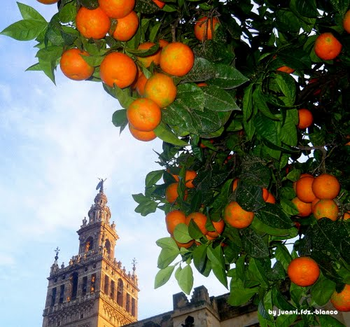 Photo of Seville in the TripHappy travel guide