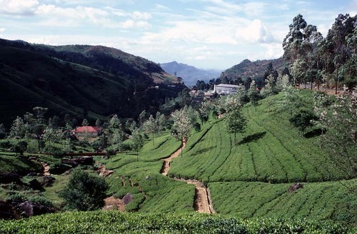 Photo of Nuwara Eliya in the TripHappy travel guide