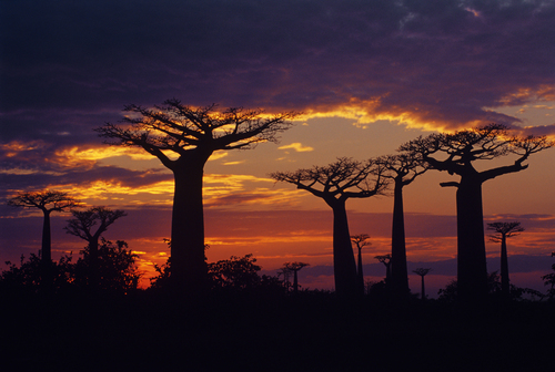 Featured medium photo of Morondava on TripHappy's travel guide