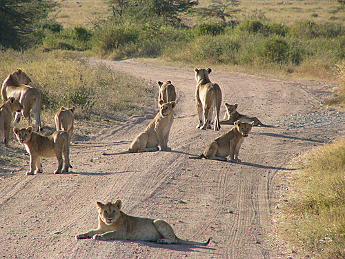 Photo of Serengeti National Park in the TripHappy travel guide