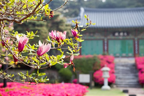 Photo of Jeonju-si in the TripHappy travel guide