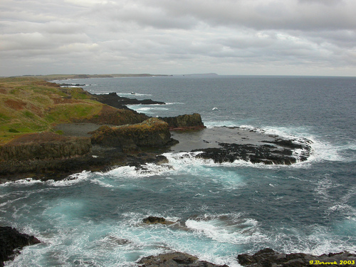 Featured medium photo of Phillip Island Nature Park on TripHappy's travel guide