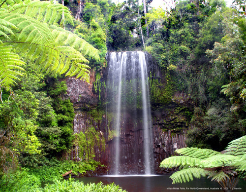 Photo of Millaa Millaa in the TripHappy travel guide