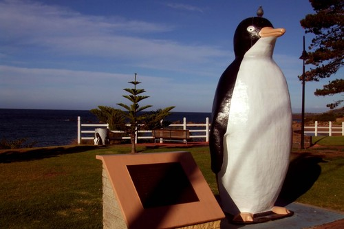 Photo of Penguin in the TripHappy travel guide
