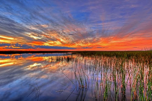 Photo of Everglades in the TripHappy travel guide