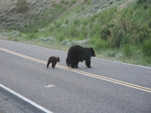 Photo of Yellowstone National Park in the TripHappy travel guide