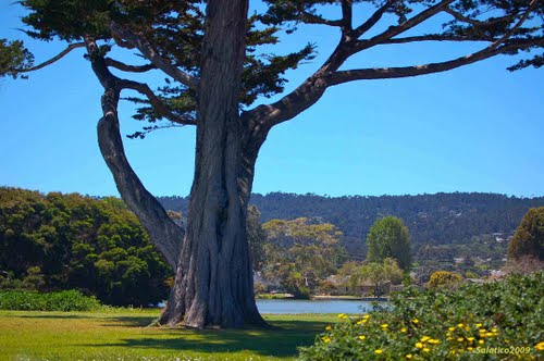 Photo of Carmel-by-the-Sea in the TripHappy travel guide