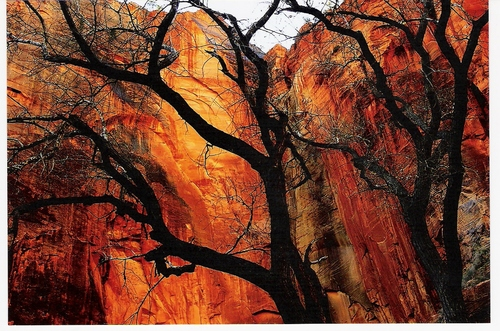 Photo of Angels Landing in the TripHappy travel guide