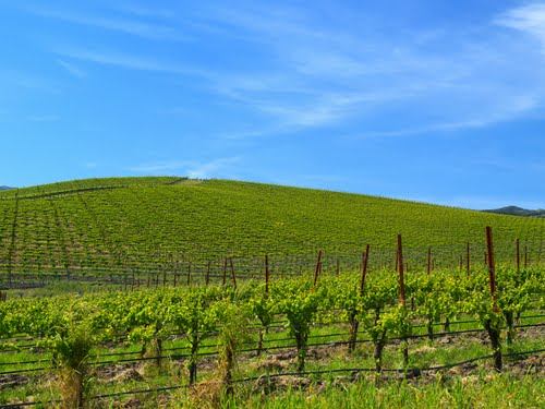 Featured medium photo of Sonoma on TripHappy's travel guide