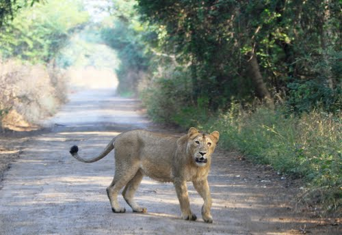 Photo of Gir National Park in the TripHappy travel guide