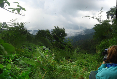 Photo of Bwindi Impenetrable National Park in the TripHappy travel guide