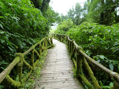 Featured medium photo of Doi Inthanon National Park on TripHappy's travel guide