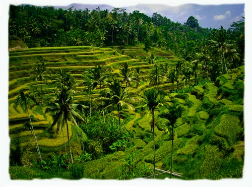 Featured medium photo of Bedulu on TripHappy's travel guide