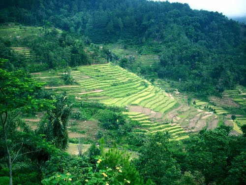Featured medium photo of Lumbung on TripHappy's travel guide