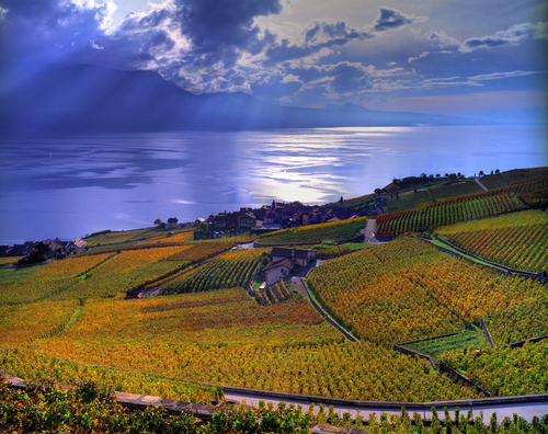 Featured medium photo of Lavaux, Vineyard Terraces on TripHappy's travel guide