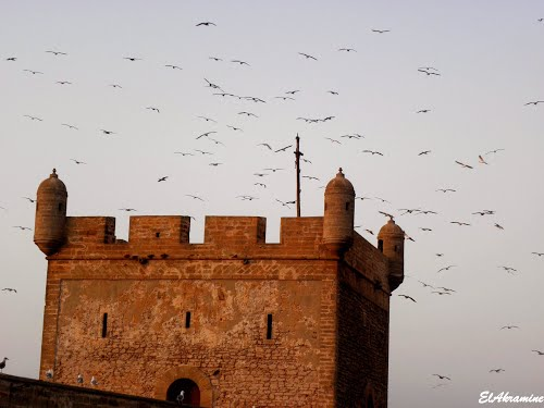 Photo of Essaouira in the TripHappy travel guide